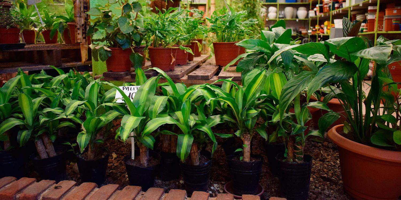 Plantas mi yuyito for Vivero mi planta